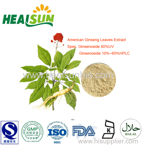 American Ginseng Leaves Extract Powder