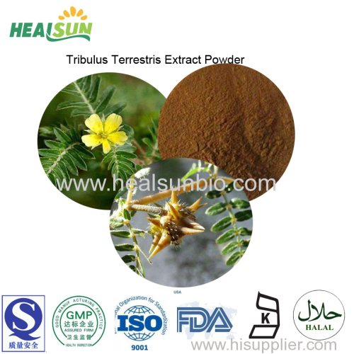 Tribulus Terrestris extract powder Saponins 40%- 60% UV