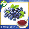 bilberry extract 15% Anthocyanin