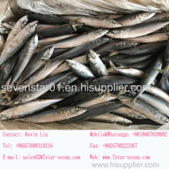 seven star sea frozen mackerel fish