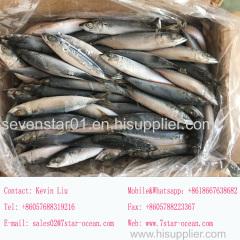 August 2017 Arrival Best Quality Fresh 200-250g Frozen North Pacific Frozen Mackerel Fish