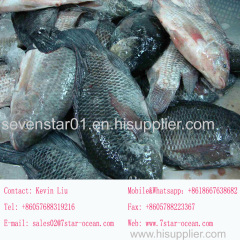 August 2017 New Arrival Best Quality Cheapest Fresh150-200g Whole Round Frozen Tilapia