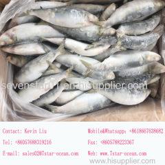 2017 New Arrival Fresh High Quality Frozen Sardine Fish