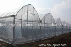 multi span greenhouse with cooling system