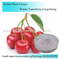Cherry Powder / Cherry Extract Powder Water Soluble / Cherry Enzyme Powder