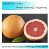Grapefruit Powder/Grapefruit Enzyme/Grapefruit Extract/
