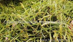 Factory direct sale of gold and silver tea cultivation herbal tea wholesale bulk honeysuckle fruit tea.