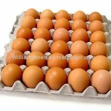 Organic Fresh Chicken Table Eggs