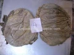 Wholesale Salted Beef Omasum