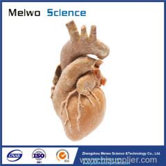 Cardiovascular plastianted specimen for medical anatomy teaching