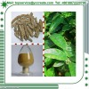 Sexual Enhancer Medicinal Indian Mulberry/Morinda Root Extract