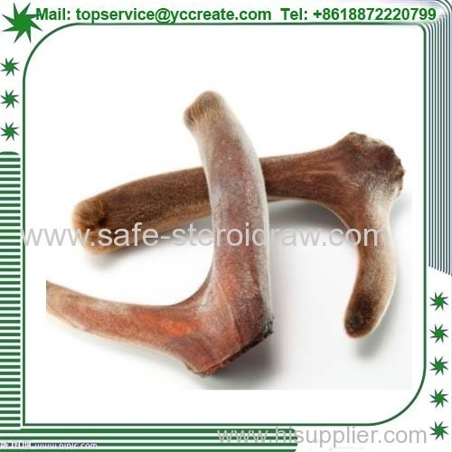 Deer Antler Velvet Horn Extract For Male Health