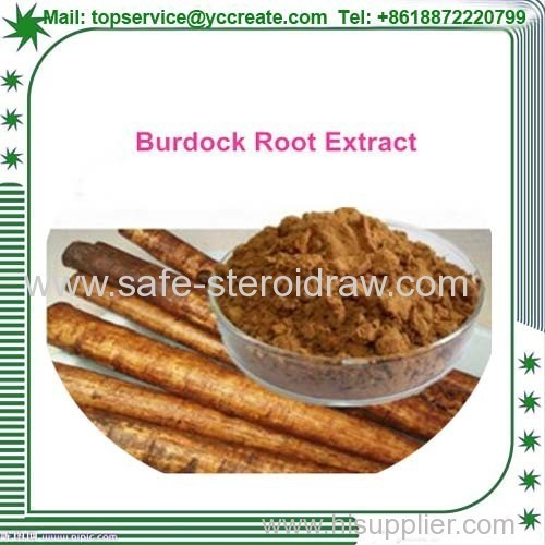 Factory supply directly 100% natural Burdock Root extract