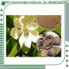 100% Natual Plant Extract Magnolol