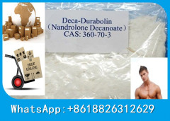 Powerful anabolic steroid hormone Deca Nandrolon Decanoate powder for building mass