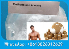 Muscle Building Anabolic Steroid Powder Primobolan Acetate Pharmaceutical Steroid For Bodybuilding