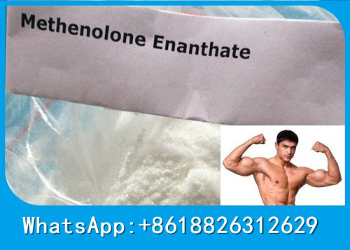Fat Loss Primobolan Enanthate Reliable Anabolic Enanthate Steroid Powder