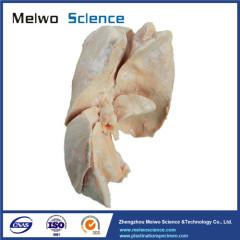 The liver of dog plastination specimen