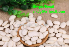 White kidney bean WHITE KIDNEY BEAN Chinese supplier High quality