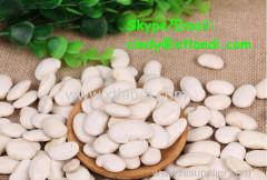 White kidney bean WHITE KIDNEY BEAN Chinese supplier High quality