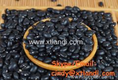 черный фасоль черный черный фасоль китайский поставщик высокое качество