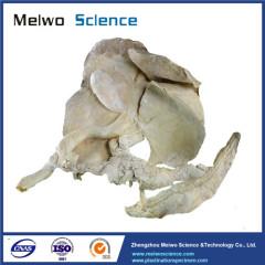 Pig liver pancreas duodenum spleen plastinated specimen