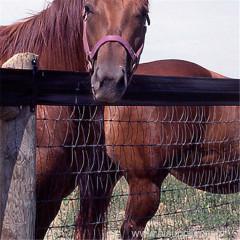 V horse mesh fence
