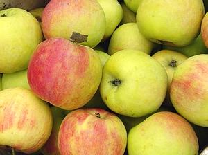 shangsha apple