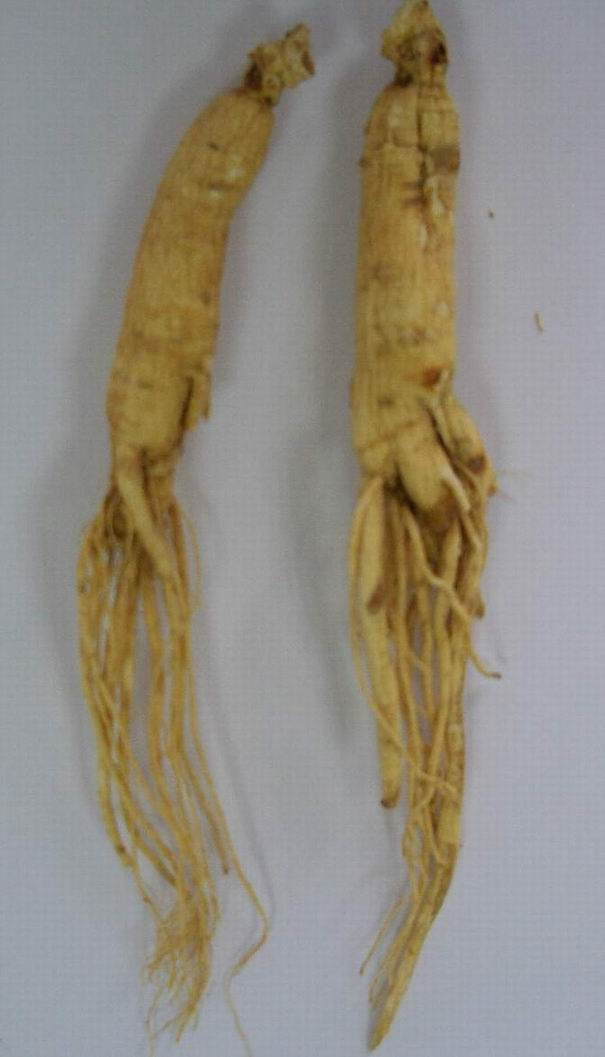 Sell Ginseng Roots and Ginseng Extract