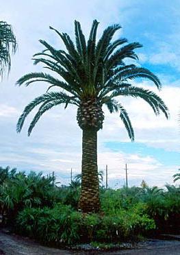 user informedtraveler informed traveler palm