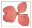 A Flowers & Petals