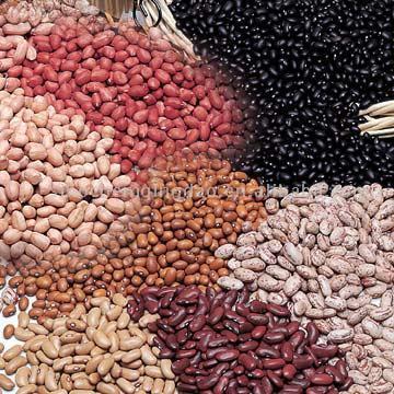 Peanut Kernel - Peanut In Shells