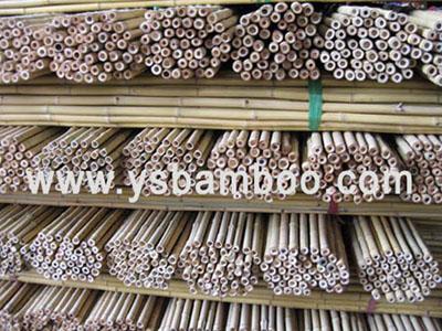 bamboo fense