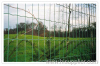 Black euro welded fence