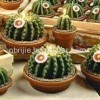 Cactus Craft Candle