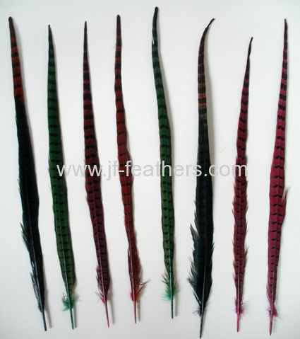 Ringneck Pheasant Tail in color