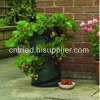 Strawberry Planter bag