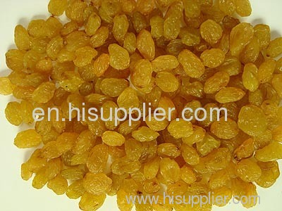 Iranian Golden Raisin