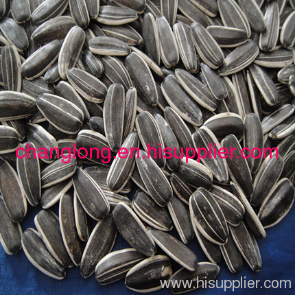 Confectionary striped sunflower seeds 5009