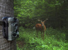 Outdoor Digital Hunting Camera/Scouting Trail Camera With 11 Languages