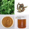 Siberian Gingseng Plant Extract