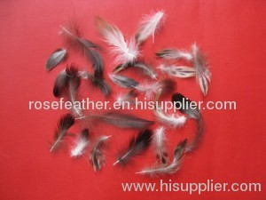Washed grey duck feather