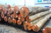 Quality Timber and lumber sawn logs hardwoods.
