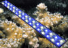New high power 120cm/48inch 100w no fans Aquarium Led Lights