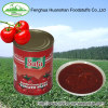 Canned hygienically processed Tomato paste