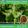 Giant Knotweed Extract 98% Resveratrol
