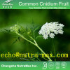 Common Cnidium Fruit Extract 30% Osthole