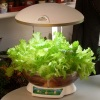 Smart Garden can fish in the fish tank a variety of plants can be grown. can be used as a table lamp