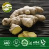 Ginger root extract gingerol