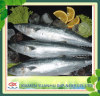Frozen King Fish Mackerel